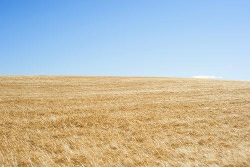 実は超万能!大麦若葉の効果・効能を詳しく解説!
